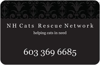 NHCats business card