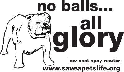 No Balls All Glory 10 x 6